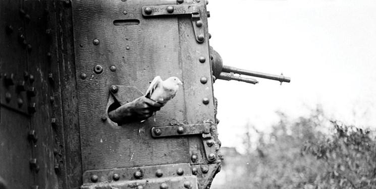نامه کبوتر جنگ جهانی اول پس از 100 سال پیدا شد!